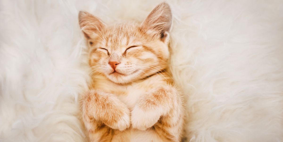 100 имен кошек для девочек, которые так же милы и милы, как ваша кошечка