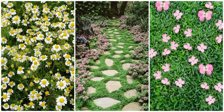 13 Best Ground Cover Flowers and Plants - Low Growing Perennial Flowers