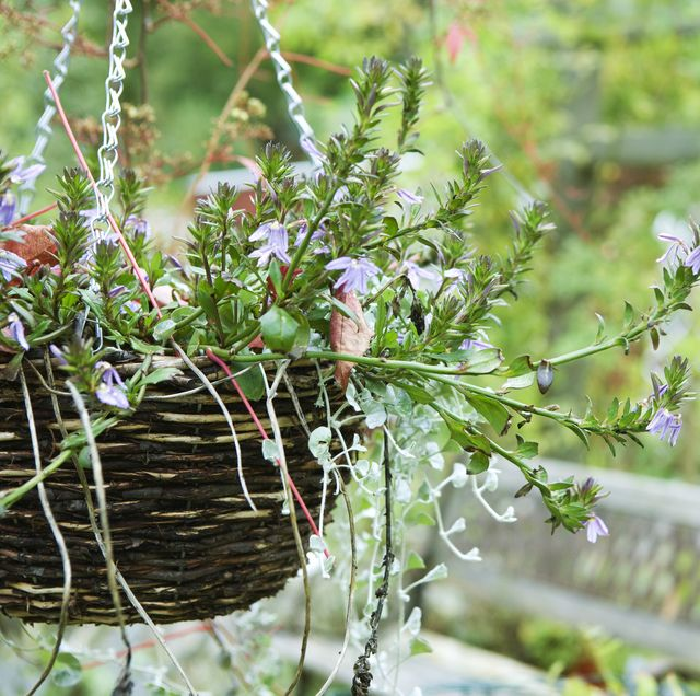 17 Best Hanging Plants Easy For Baskets