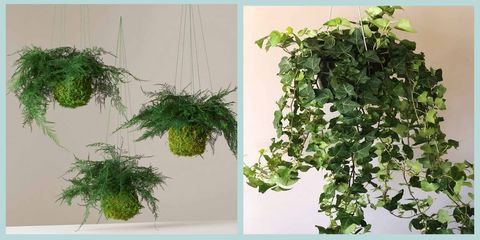 Plant, Leaf, Green, Flowerpot, Houseplant, Herb, Flower, Ivy, Grass, Tree,