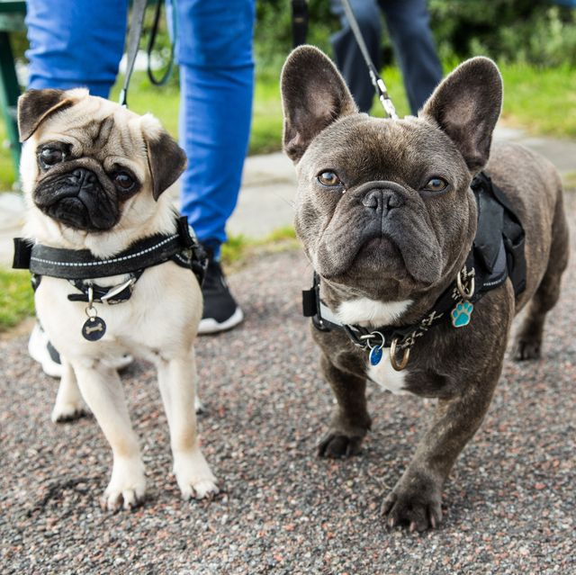 best harnesses for puppies
