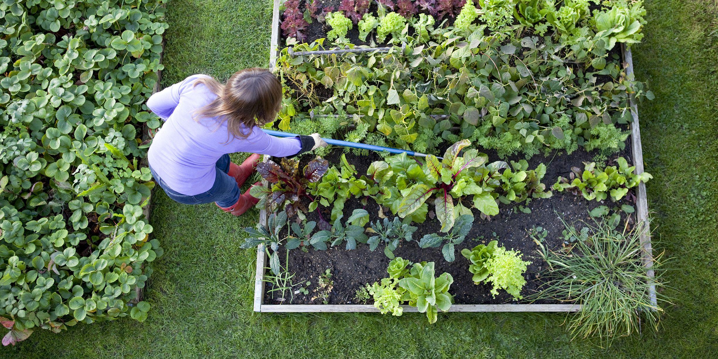 gardens small preen lb grass family a ways organic preventer vegetable control for all toxic footprint weed granular beds garden to non killer weeds
