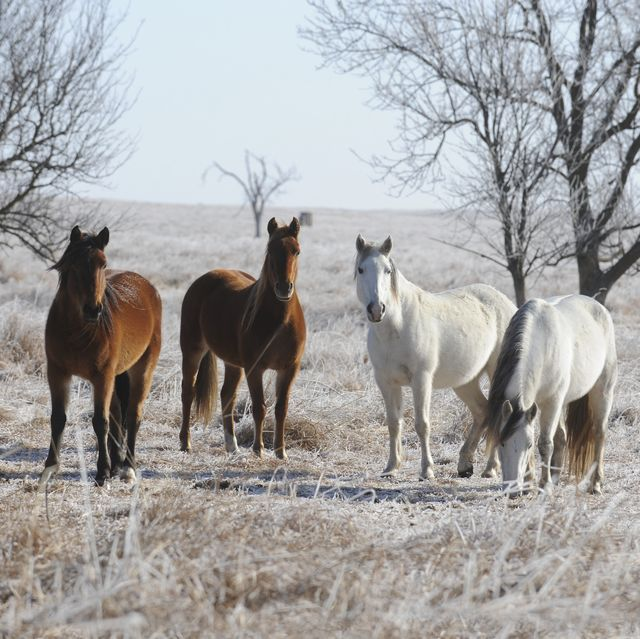 horses on drummond ranch in winter