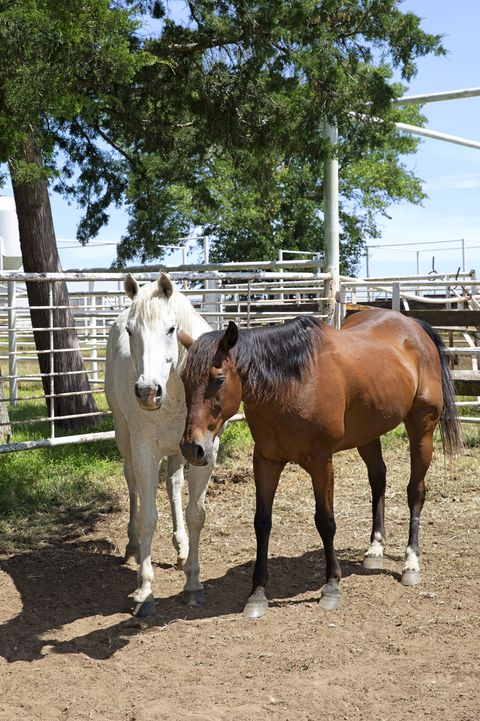 mustangs drummond ranch