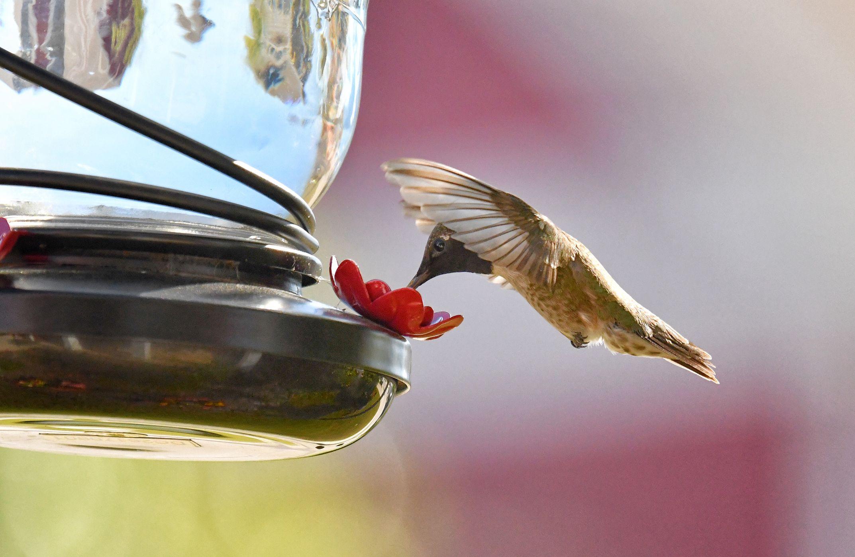 single feed hummingbird feeder