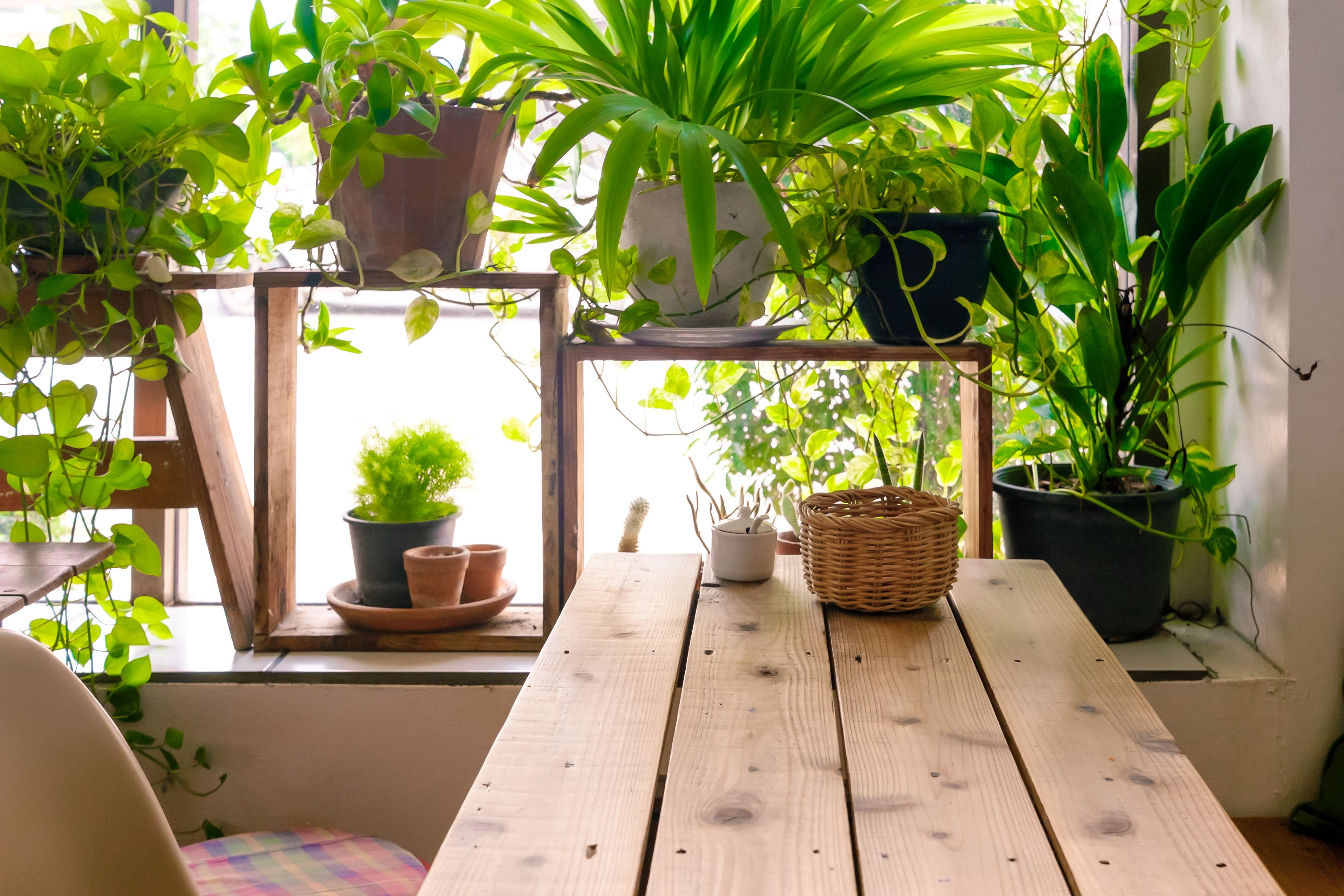 cool office plants. 7 Best Indoor Plants For Air Quality - Air-Purifying Houseplants Your Home Cool Office