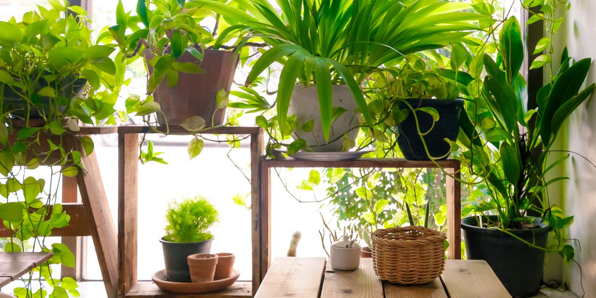 7 Best Indoor Plants For Air Quality Air Purifying