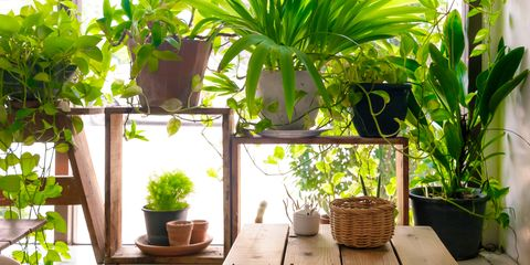 7 Indoor Plants That Can Actually Purify The Air In Your Home