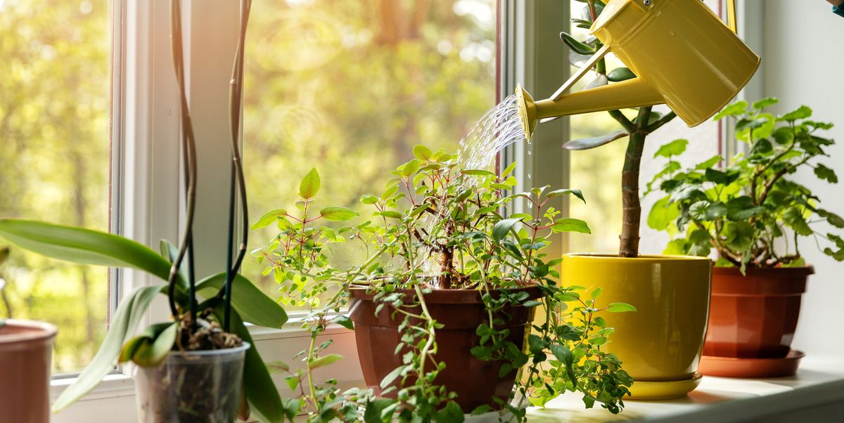 The Best Indoor Plants to Add Some Life to Your Home