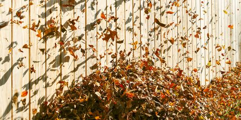 leaf pile blowing in the wind by a wooden fence