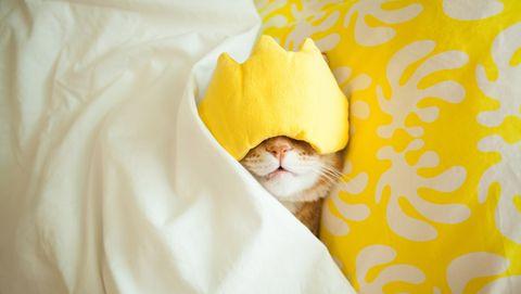 kat met een slaaplapje