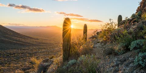 Nature, Sky, Saguaro, Morning, Landscape, Sunlight, Sunrise, Cactus, Tree, Plant,