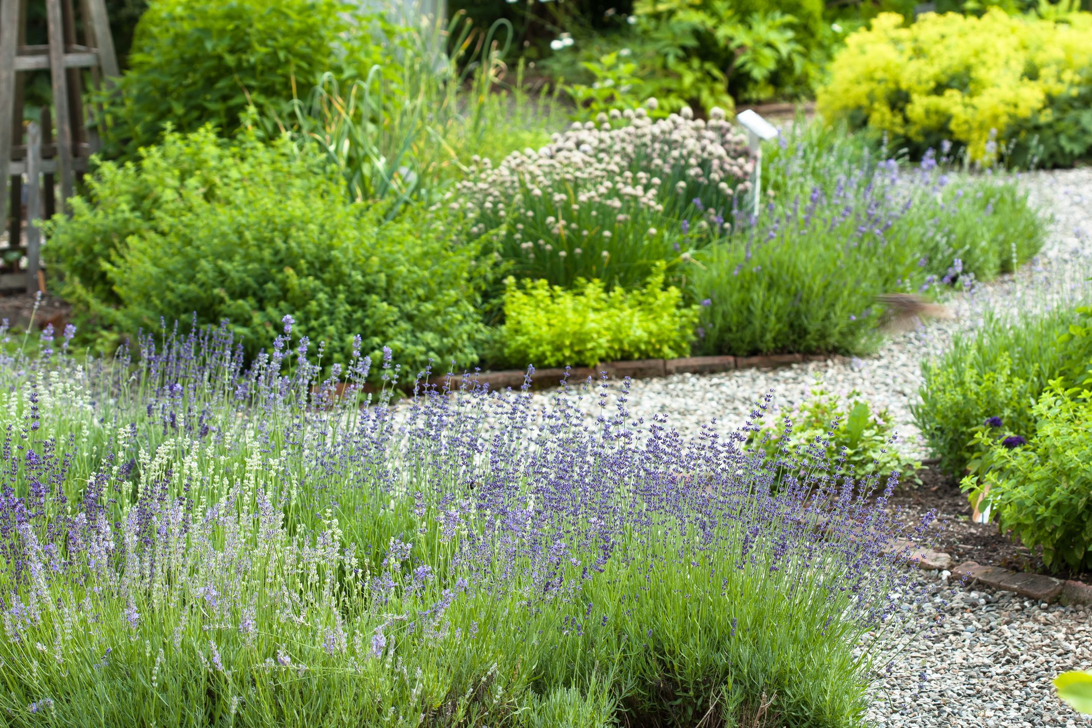 20 Perennial Herbs for the Tastiest Edible Garden Ever