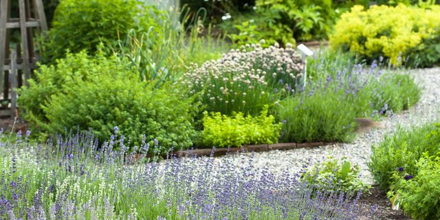 20 Perennial Herbs for the Tastiest Edible Garden Ever