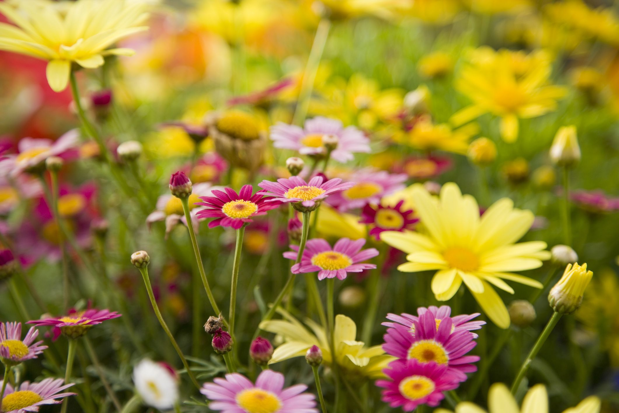 Ideas For Easy Perennial Flowering Plants