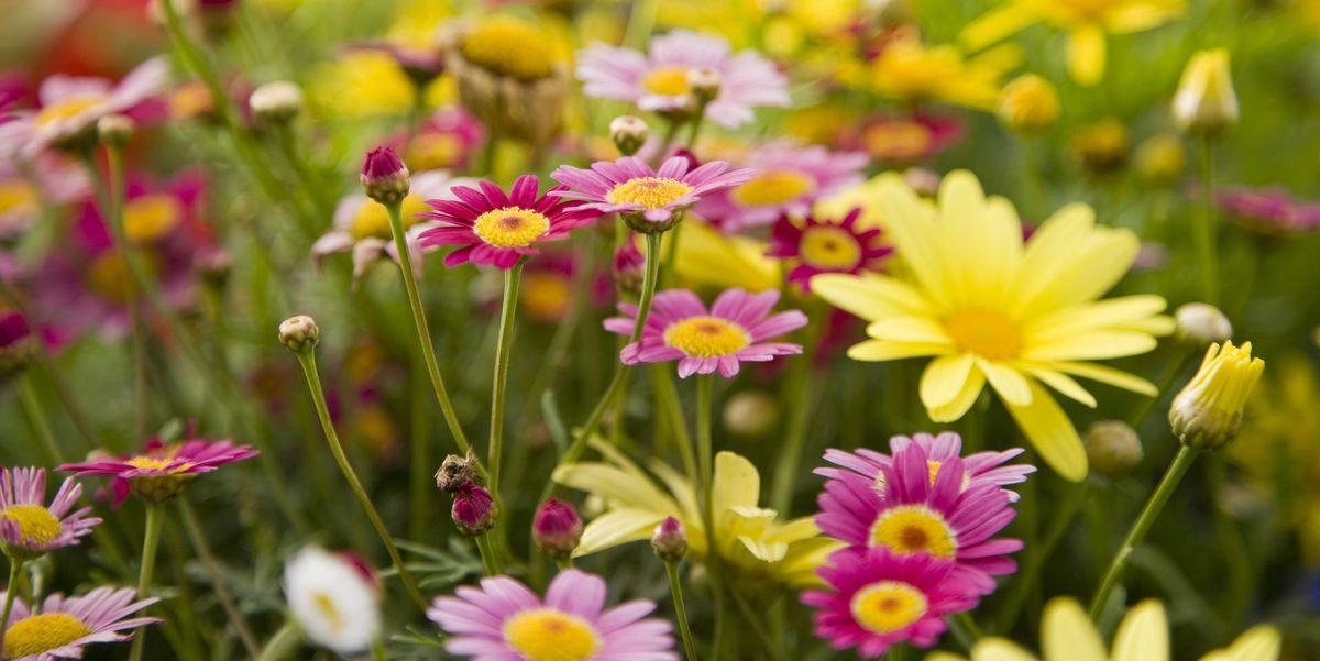 25 Best Perennial Flowers Ideas For Easy Perennial Flowering Plants
