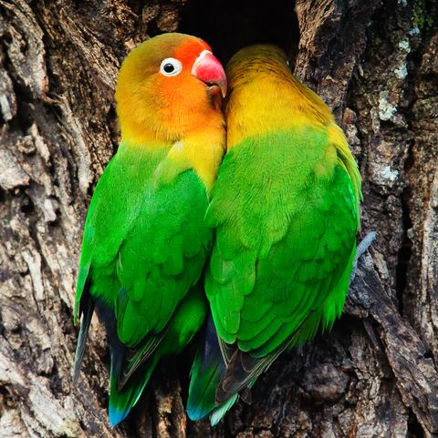 10 Best Pet Birds Best Birds For Family Pets