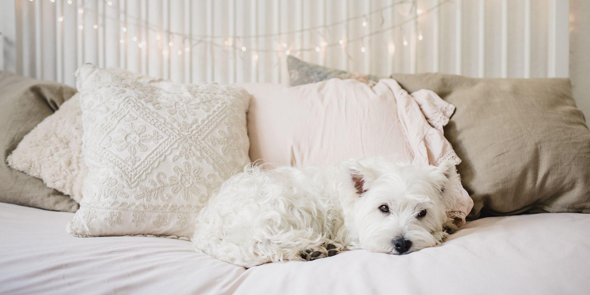 best bed pillows 2019