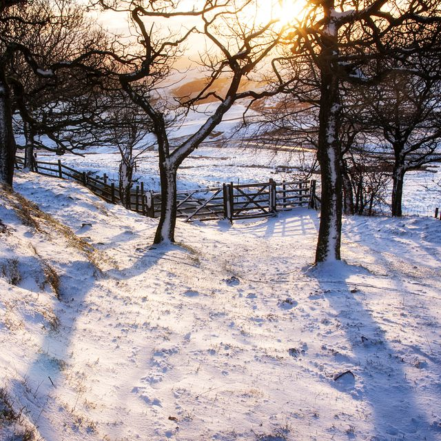 Snowing Christmas Scene.Best Places To Go For Uk Snow Uk Winter Breaks