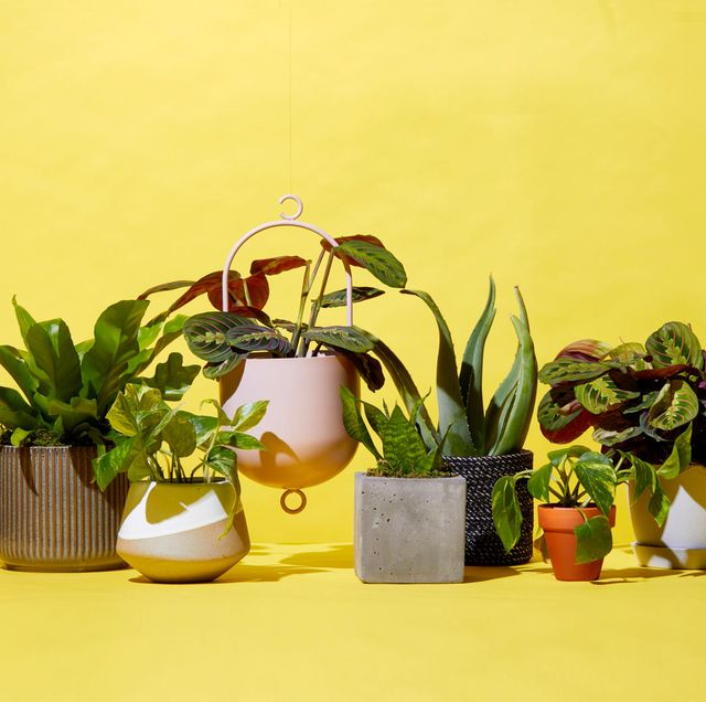 Best Places To Plants Online