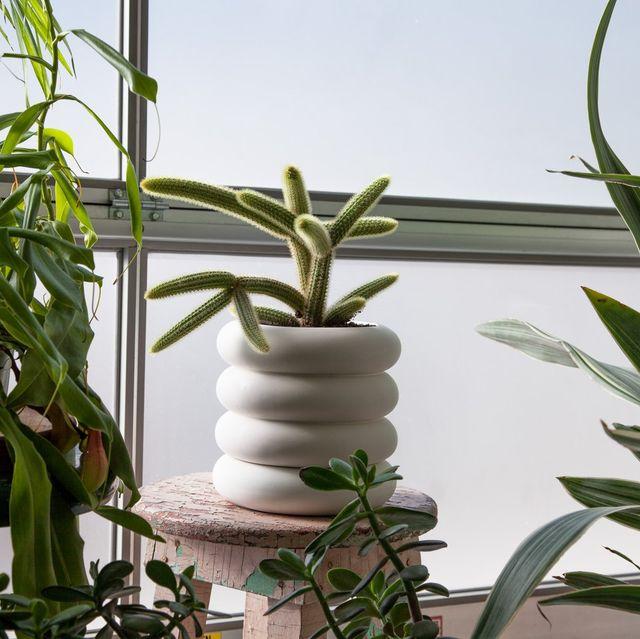 planter with cactus