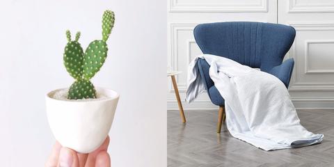 Cactus, Flowerpot, Houseplant, Plant, Room, Flower, Succulent plant, Furniture, Prickly pear,