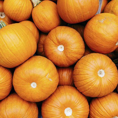 orange pumpkins in a pile