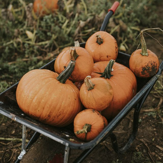 12 of the best pumpkin patches to visit in the uk
