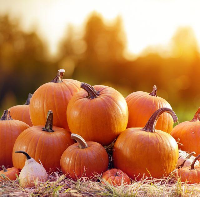 best pumpkin patch near me