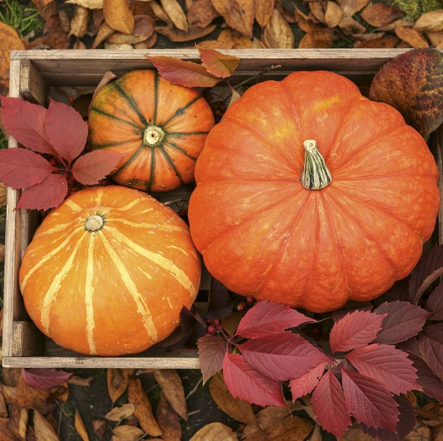 45 Best Pumpkin Quotes And Puns Funny Sayings About Pumpkins For