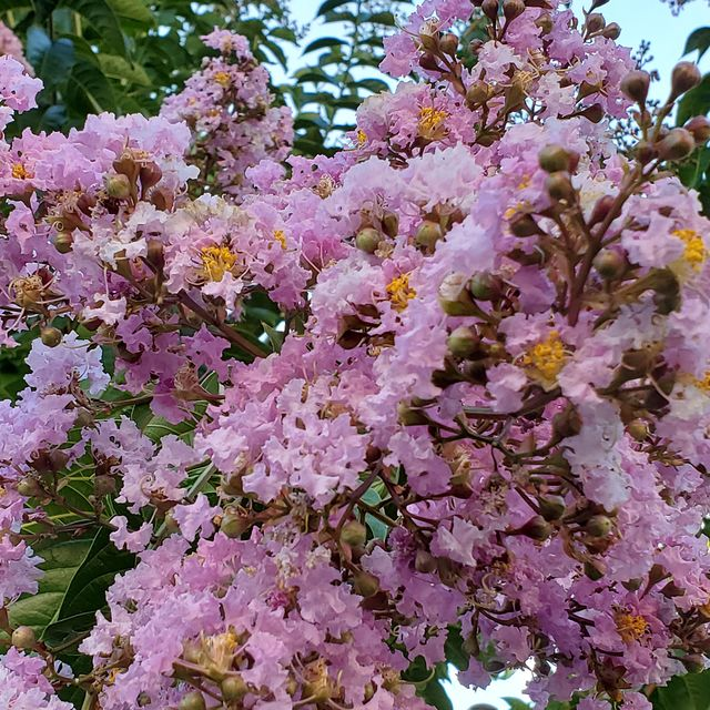 best trees for small gardens