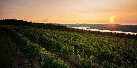 15 Best Wineries in New York - Top New York State Wineries ... Map Of Thousand Islands Wine Trail on growler lake ontario map, county ny snowmobile trail map, thousand island activities, thousand island restaurants, thousand island lake trail map,