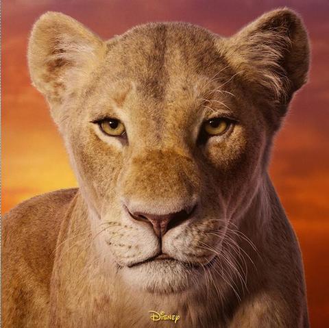 Hair, Felidae, Wildlife, Lion, Big cats, Carnivore, Terrestrial animal, Adaptation, Snout, Cougar,