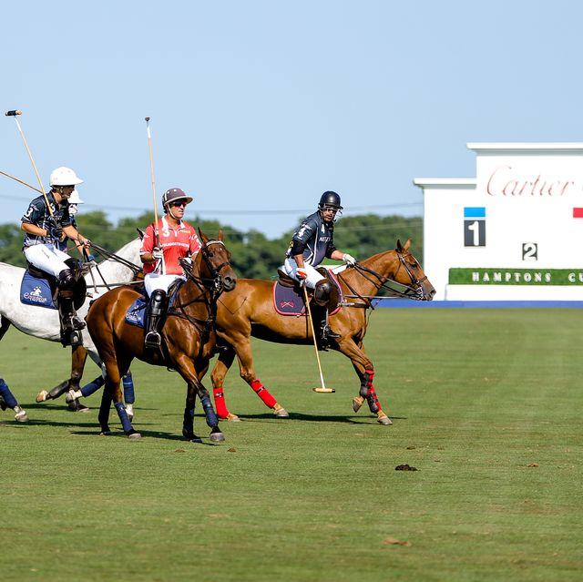 Horse, Polo, Sports, Bridle, Vertebrate, Rein, Animal sports, Mammal, Stick and Ball Sports, Halter,