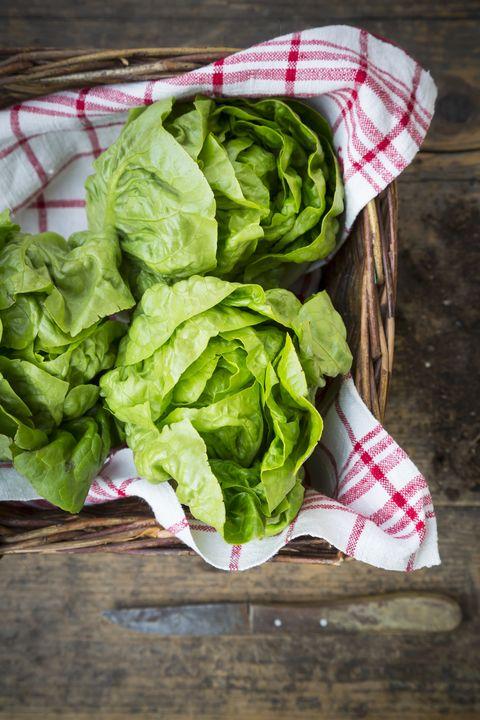 bibb lettuce types of lettuce