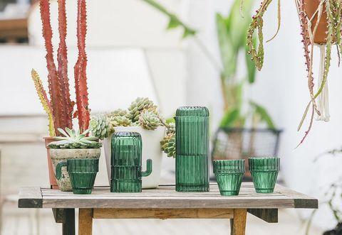 Green, Flowerpot, Table, Houseplant, Mason jar, Grass family, Plant, Flower, Branch, Room,