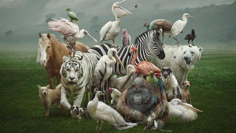 verwarrende dieren