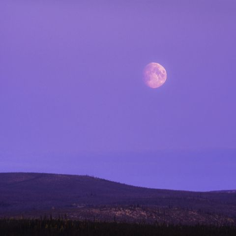 big moon over the boreal forest of the yukon territory at dusk   canada
