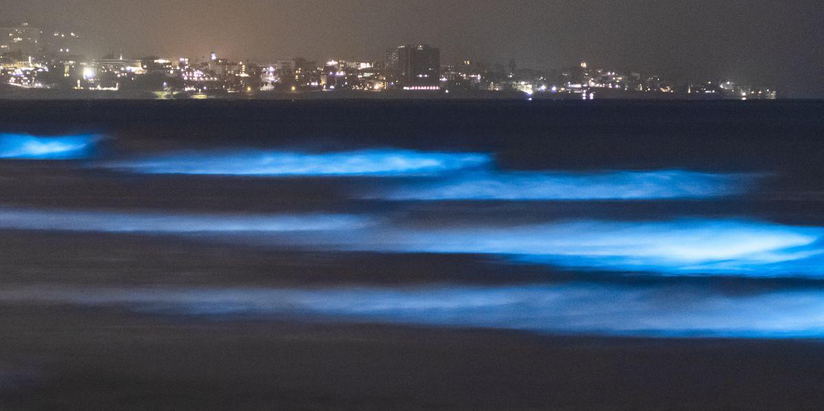 Watch Electric Blue Bioluminescent Waves Light Up California's Monterey Bay