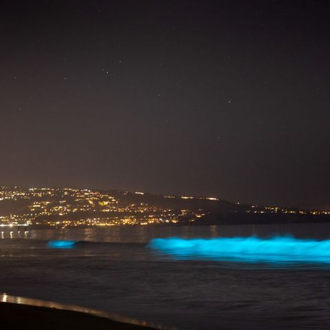 Bioluminescent Waves Are Lighting Up
