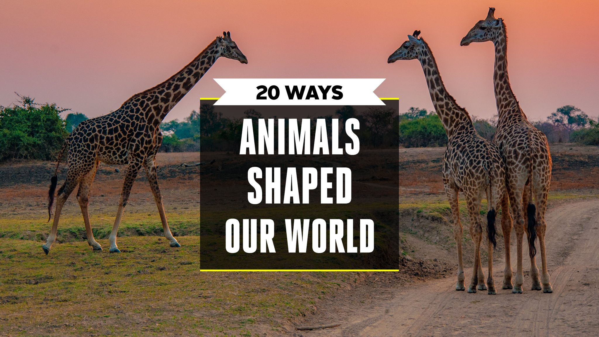 20 Times When Animals Shaped Our Modern World