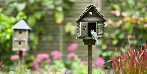 bird feeder in garden