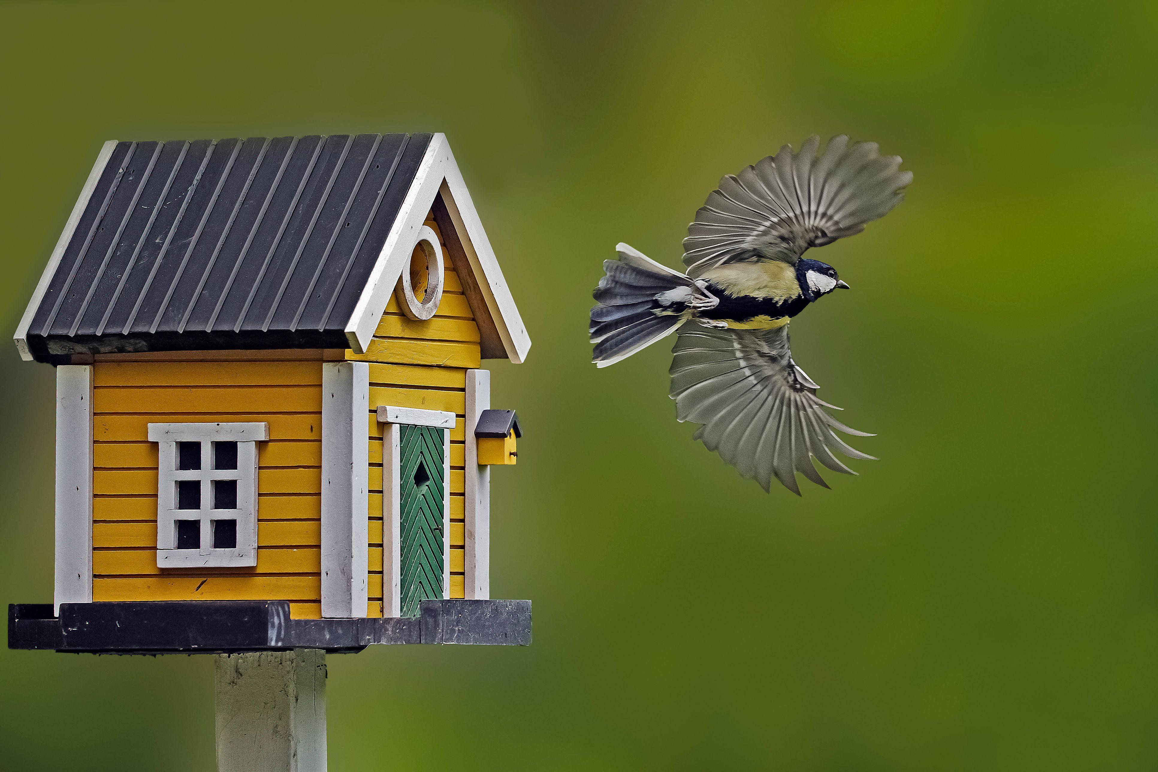 Bird box photo