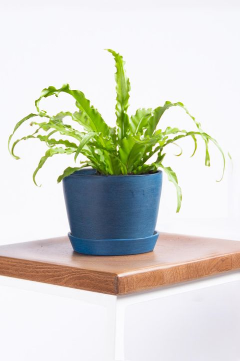 25 Best Indoor Plants For Apartments - Low-Maintenance ... Zz Plants Green Home Depot on home depot gifts, home depot balloons, home depot food, home depot shrubs, home depot birthday, home depot wedding, home depot orchids, home depot fountains, home depot flowers, home depot herbs,