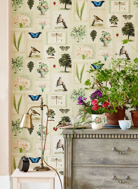 Wall, Wallpaper, Room, Interior design, Curtain, Flowerpot, Textile, Plant, Houseplant, Interior design,