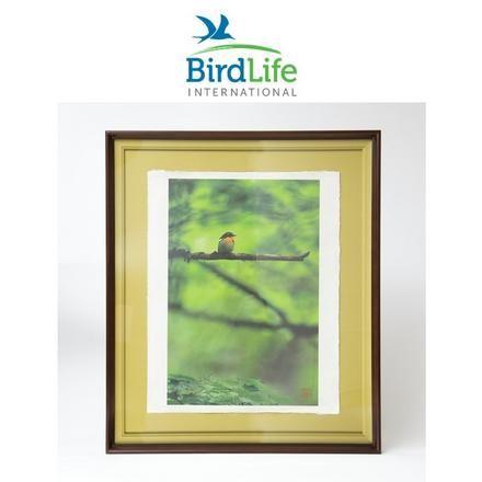 birdlife internet auction 2021