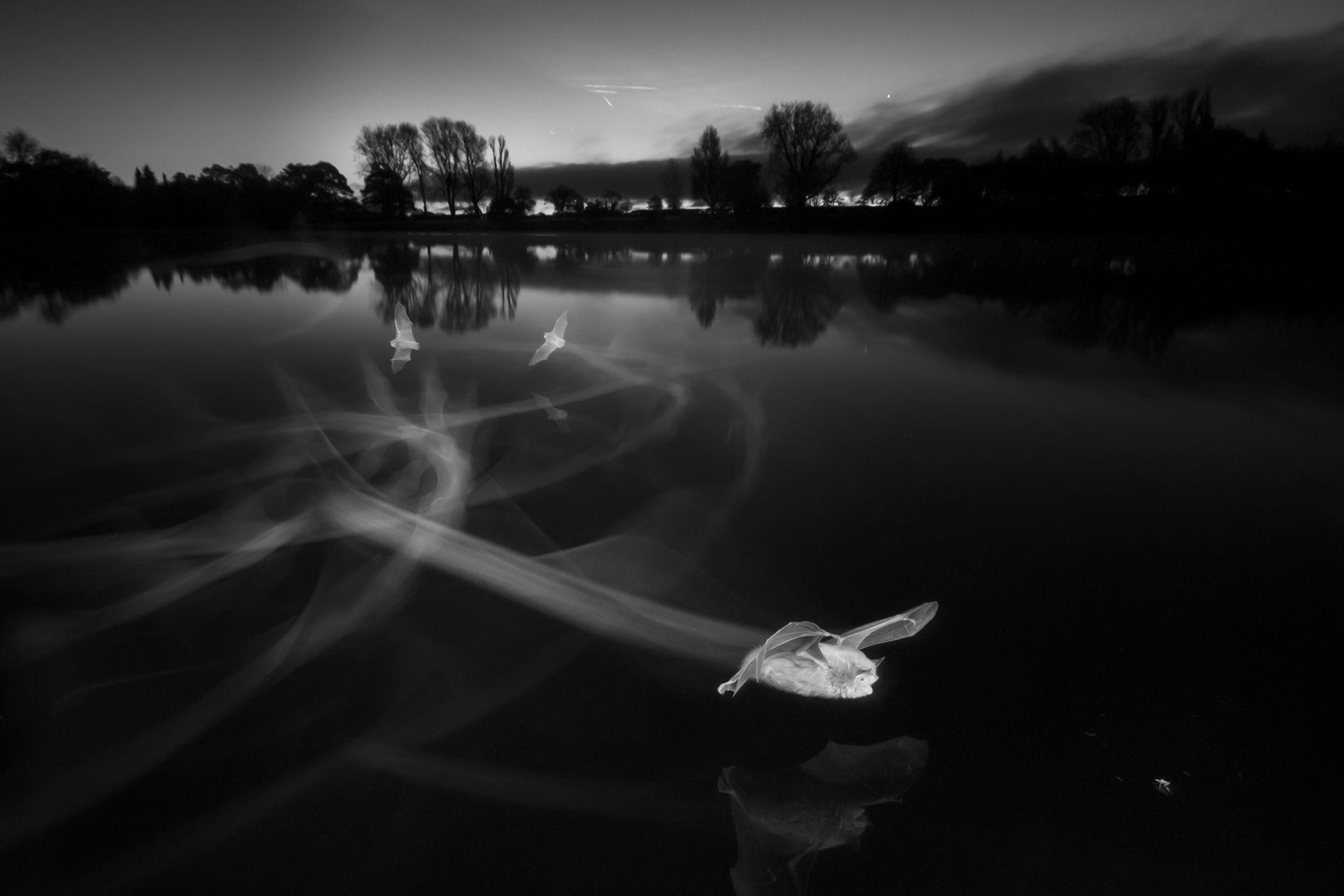 British wildlife photography awards - bats at night