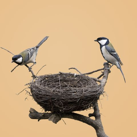 Why The Humble Bird Nest Is An Engineering Marvel