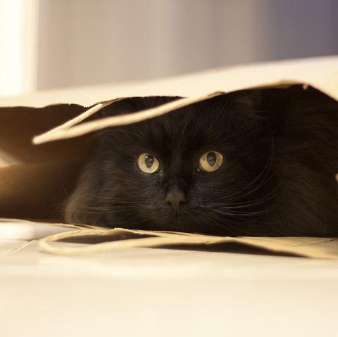 black cat hiding in a brown paper bag
