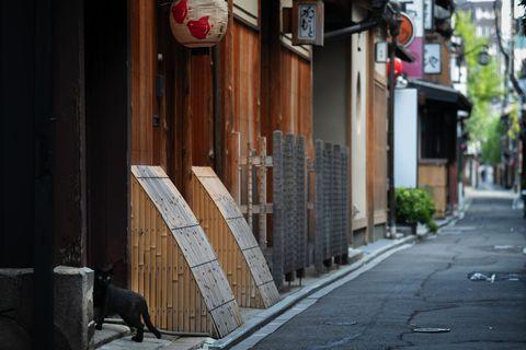 京都・先斗町no路地裏に現れた黒猫